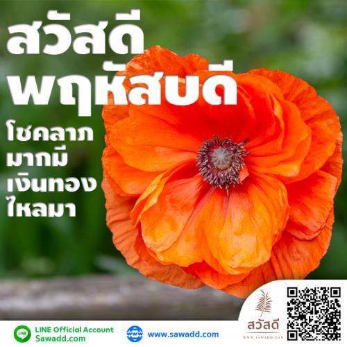 สวัสดี สวัสดีวันพฤหัสบดีดอกไม้ sawadd 008